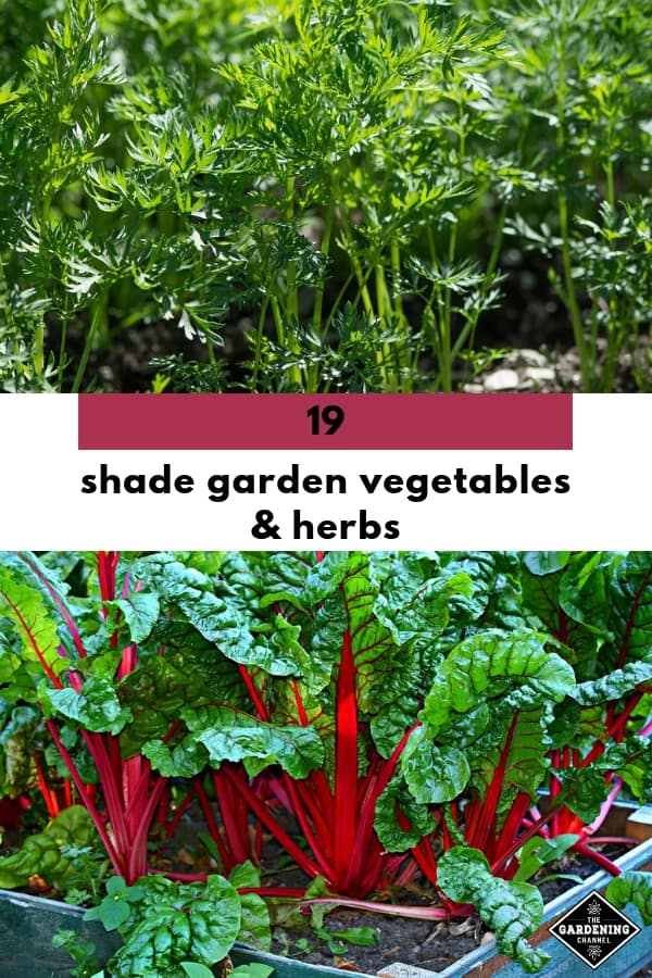 carrots and chard with text overlay nineteen shade garden vegetables and herbs