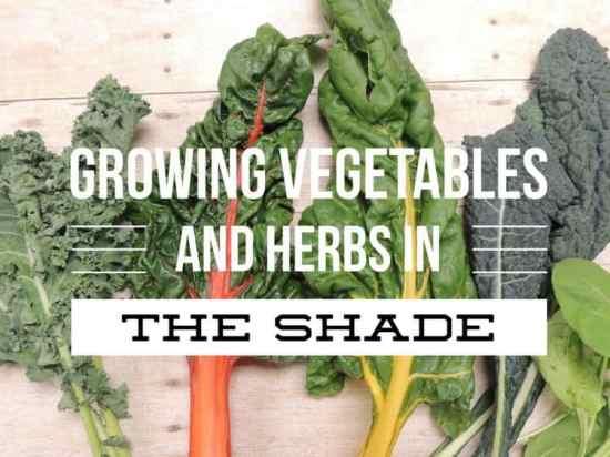 Growing a Garden in the Shade