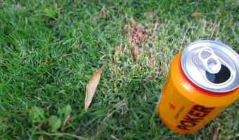 How to Use Beer in the Garden