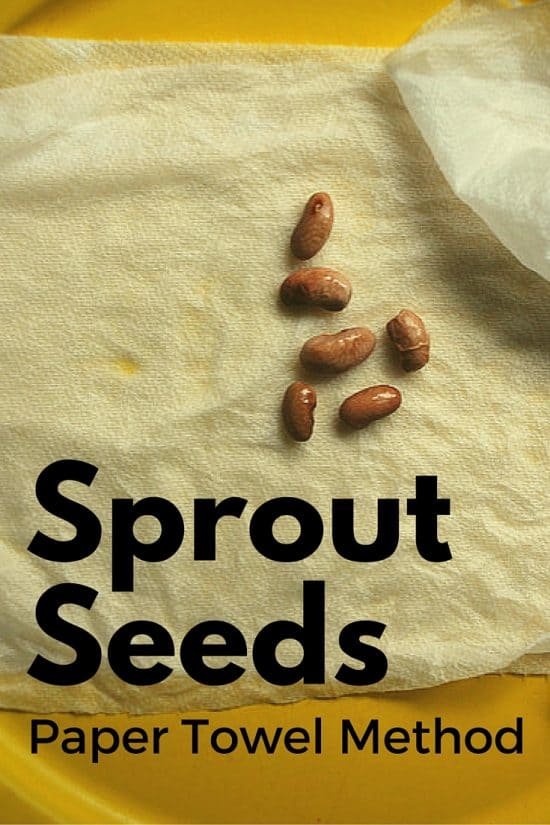 Sprouting Seeds with the Paper Towel Method