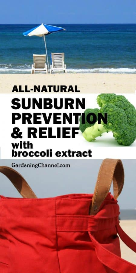 Fight sunburn with broccoli? Science says yes!