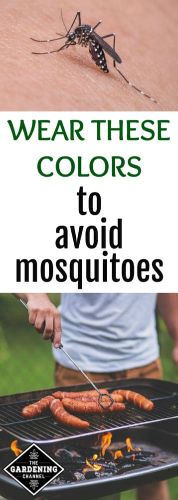 mosquito on skin and man grilling in backyard with text overlay wear these colors to avoid mosquitoes