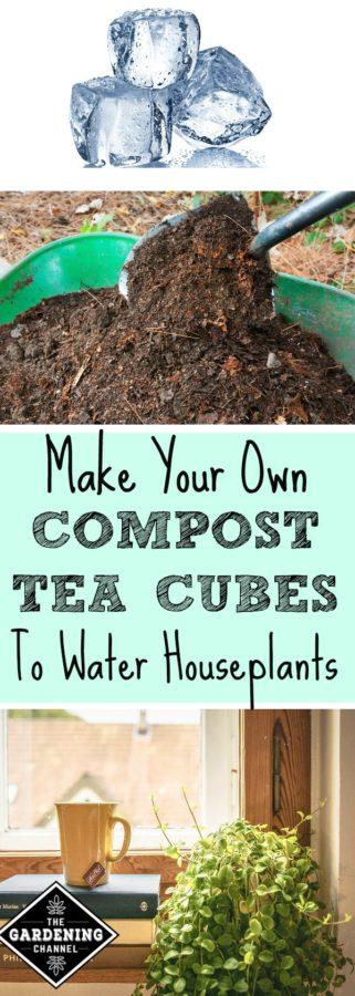 Make compost tea cubes for houseplants