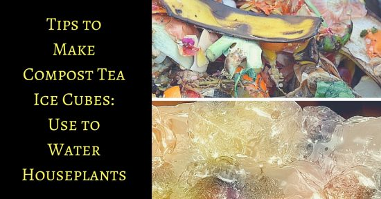 How to Make Compost Tea Ice Cubes