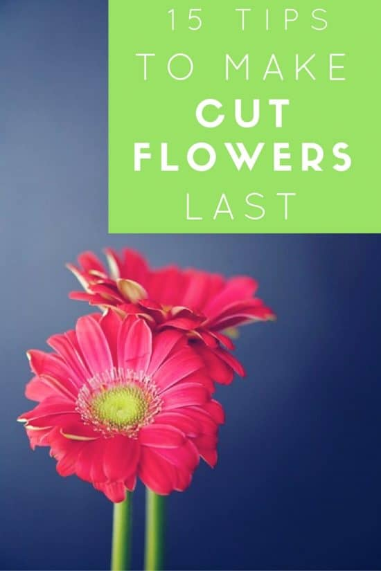 15 tips to make cut flowers last