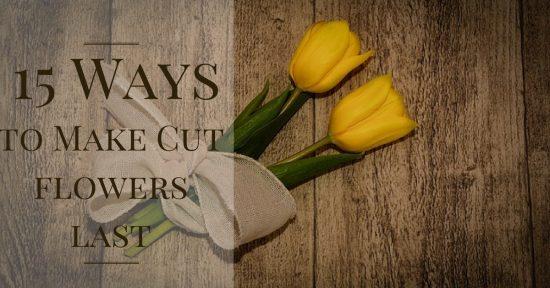 15 ways to make cut flowers last