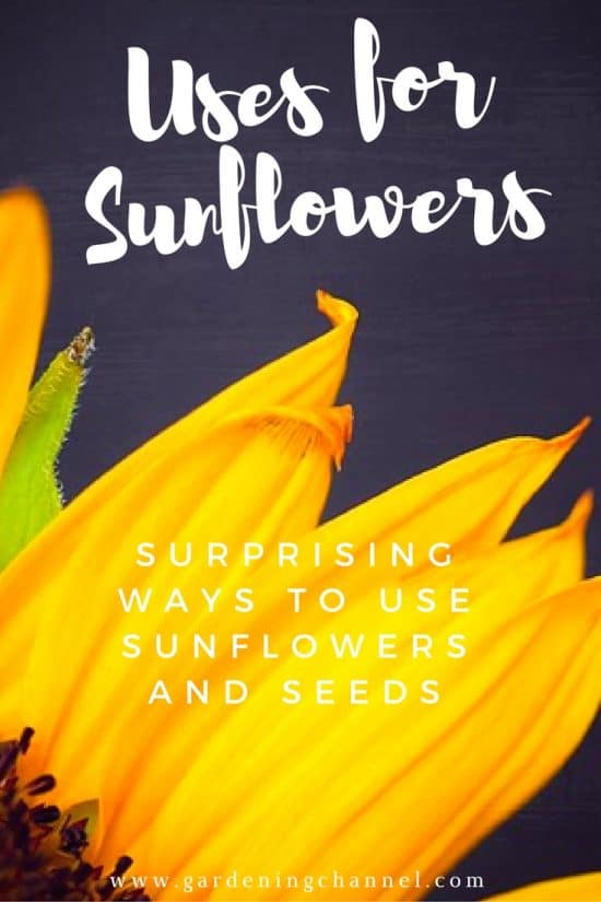 Surprising ways to Use Sunflowers