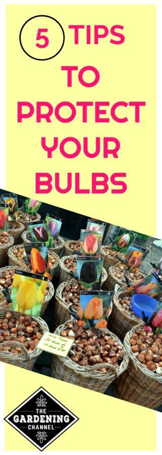 Protect your bulbs