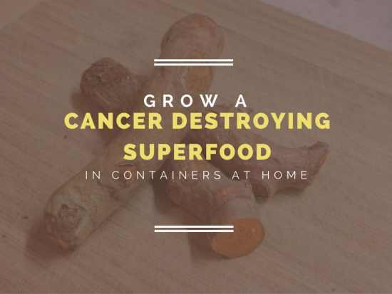 Grow a Cancer-Destroying Super Food at Home: Container Gardens of Turmeric