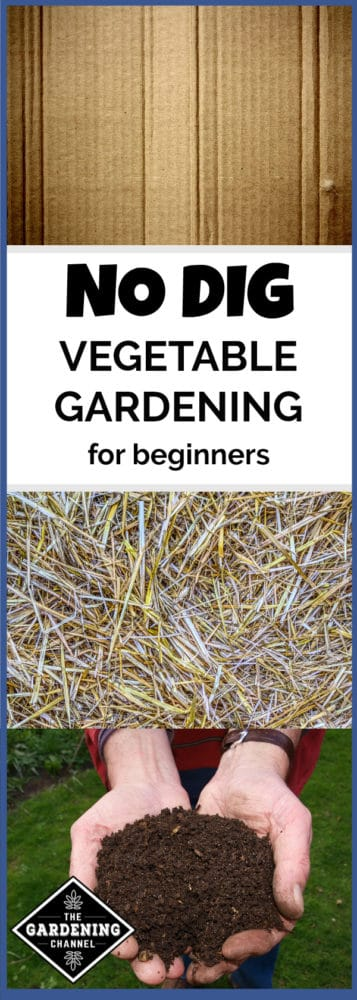 cardboard straw and compost with text overlay no dig vegetable gardening for beginners