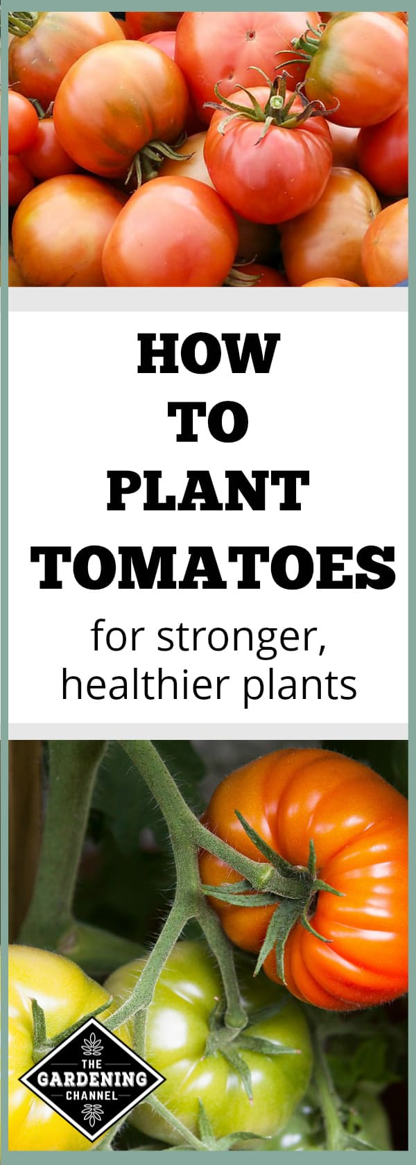 how to plant tomatoes correct way