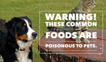Warning! These foods are poisonous to cats and dogs.