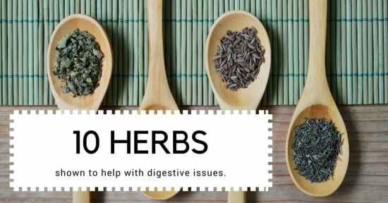 10 herbs to improve digestion and gut health
