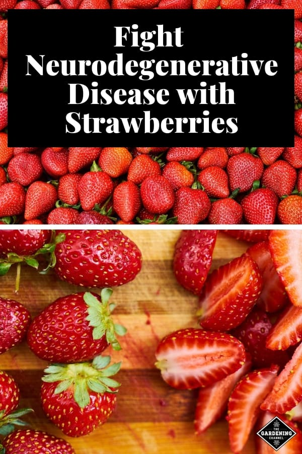 harvested strawberries and strawberries on cutting board with text overla fight neurodegenerative disease with strawberries