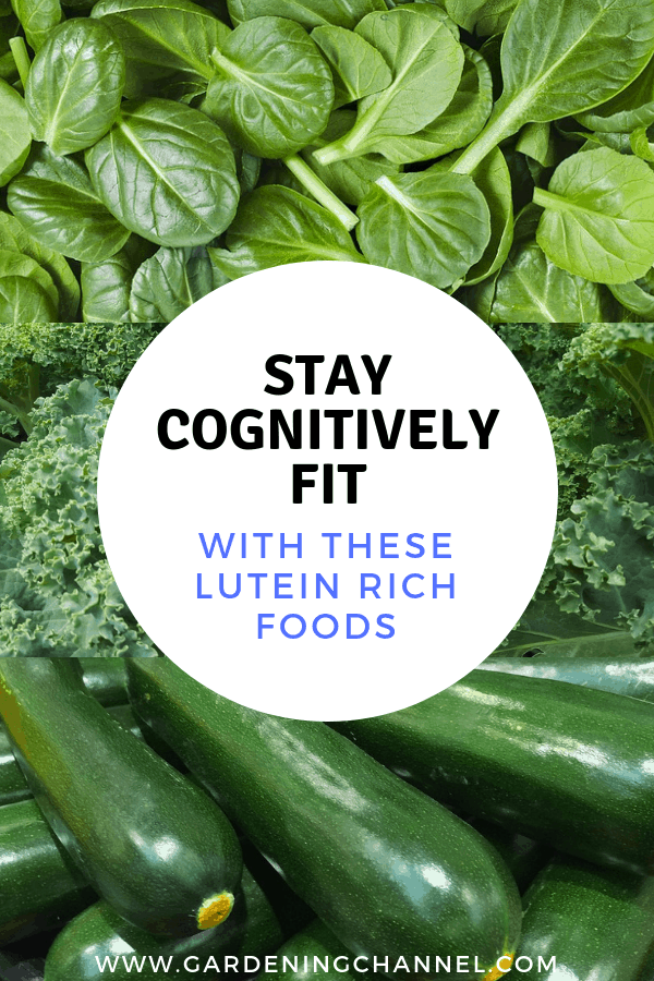 harvested spinach kale and zucchini with text overlay stay cognitively fit with these lutein rich foods