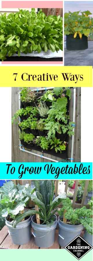 7 creative ways to grow a vegetable garden