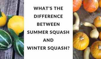 Difference between summer and winter squash