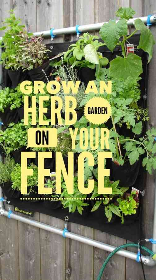 Grow on Herb Garden on Your Fence
