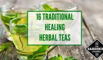 Complete Guide to Herbal Teas