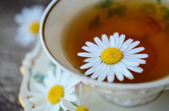 howto start a tea garden