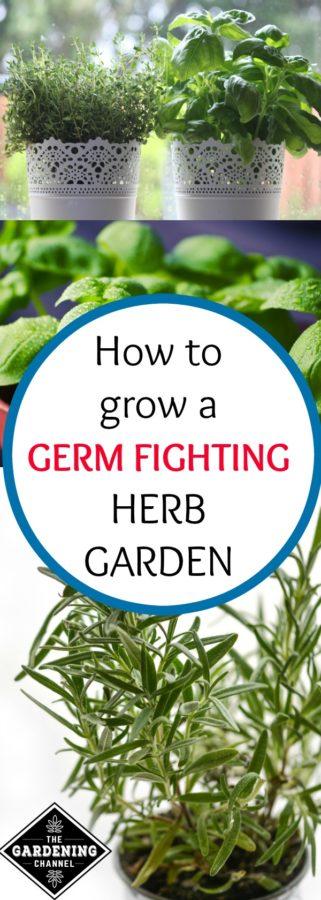 Grow a Germ Fighting Herb Garden