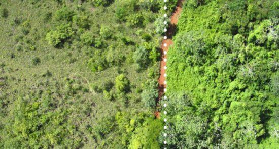 reforesting with orange peels