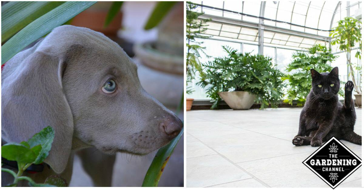 Pet Friendly House Plants and How to Care for Them ... on