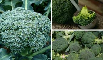 Whole broccoli better than supplements