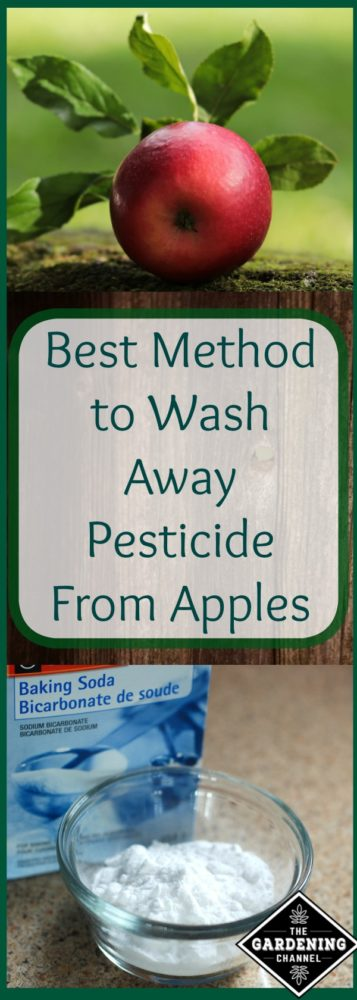 Wash Pesticide off apples from your garden