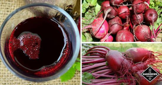 beet juice benefits