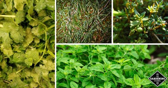 howto grow a herb garden outdoors