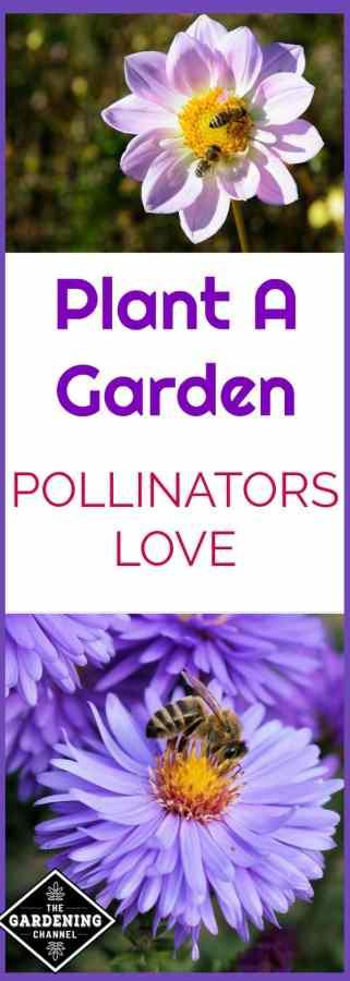 garden for pollinators