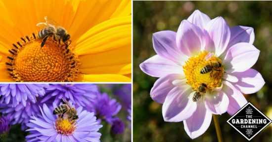 Planting a Garden Pollinators Will Love