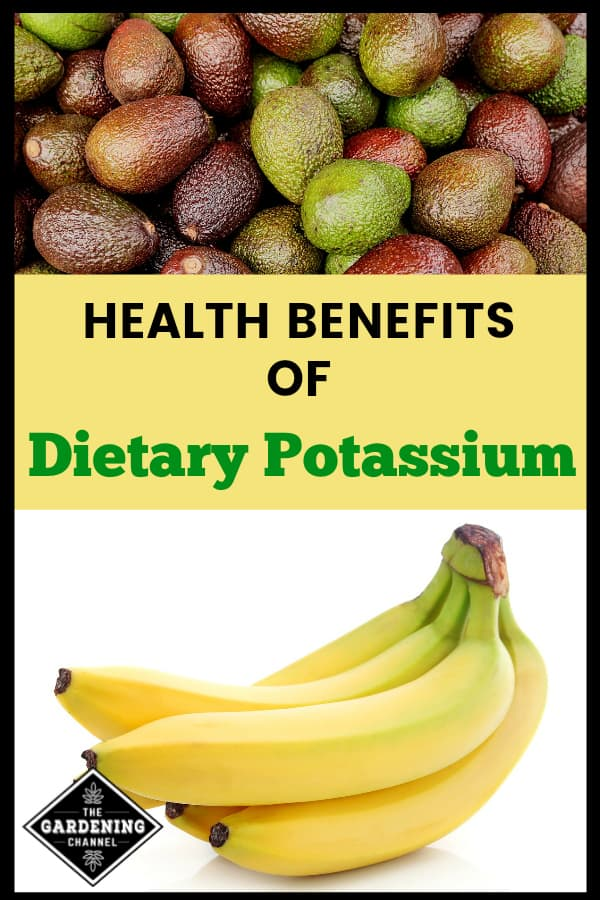 avocados and bananas with text overlay health benefits of dietary potassium