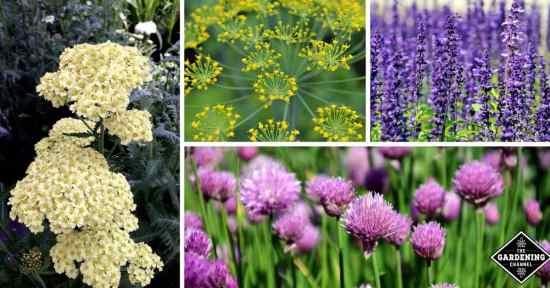 Flowering herbs with beautiful blooms