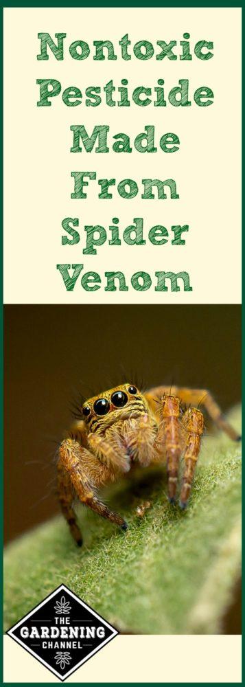 spider venom pesticide