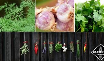 list of herbs