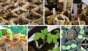 What You Need To Know About Seed Starting Containers