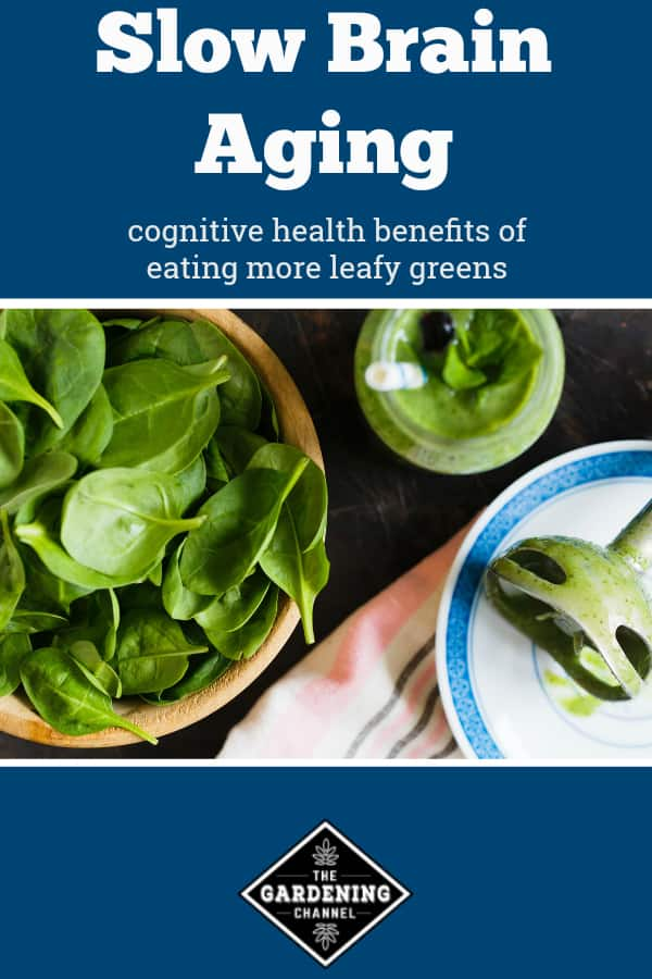 spinach smoothie with text overlay slow brain aging cognitive health benefits of eating more leafy greens