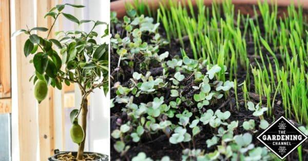 How to grow an indoor edible garden Gardening Channel