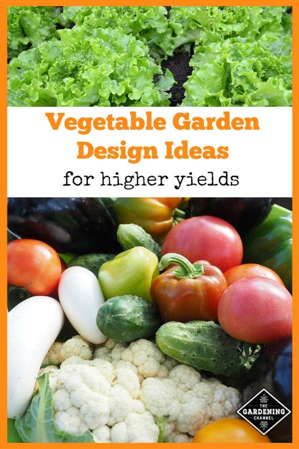 lettuce growing in garden and garden harvest with test overlay vegetable garden ideas for higher yields