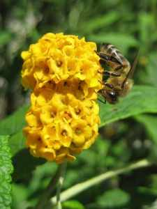 A List Of The Best Yellow Flowers For Your Garden Gardening Channel