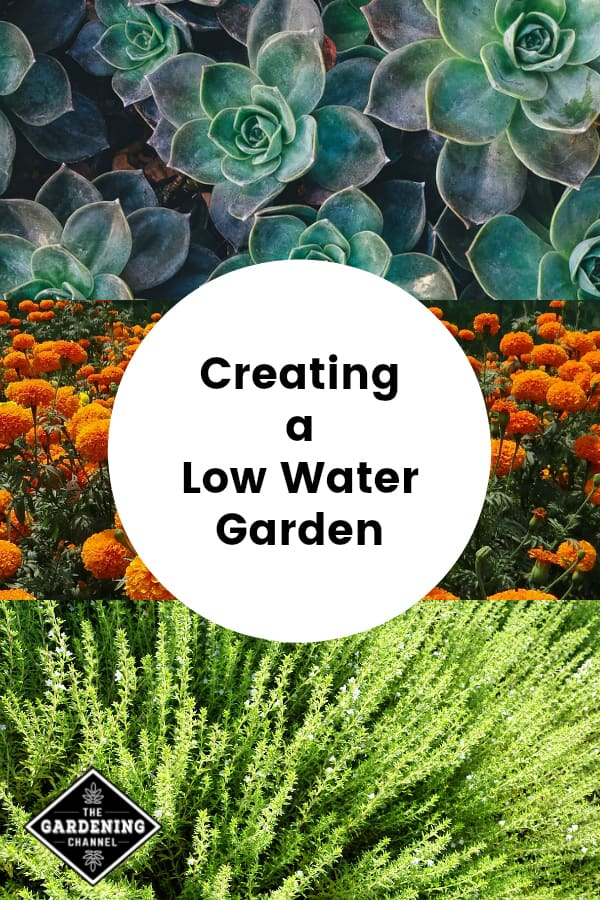 succulents marigolds and thyme with text overlay creating a low water garden