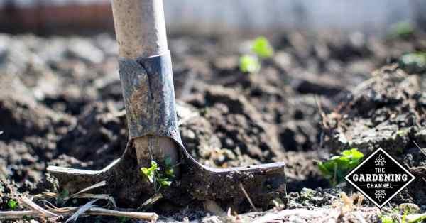 How Soil pH Balance Affects Your Garden
