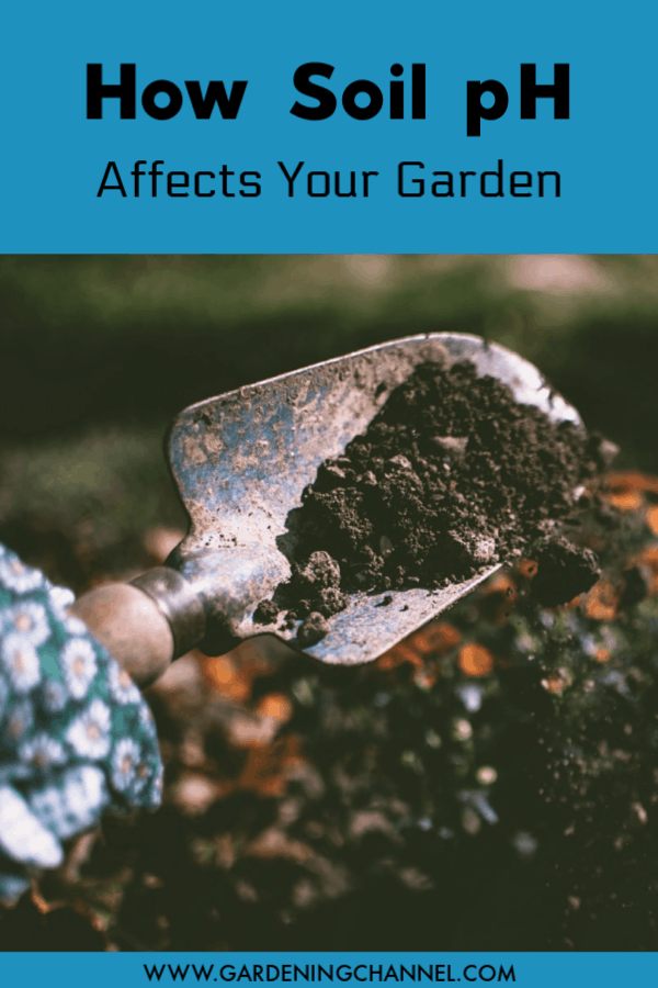 spade in the garden soil with text overlay how soil ph affects your garden