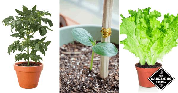 Container Vegetable Gardening 101: Best Vegetables to Grow in Pots
