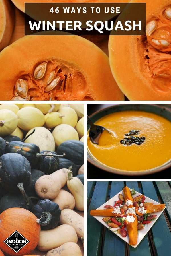 butternut squash harvested squash squash appetizer squash soup with text overlay forty six ways to use winter squash