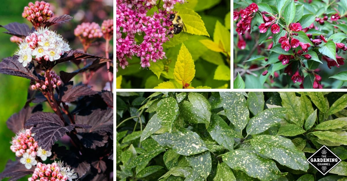 10 Shrubs With Colorful Foliage