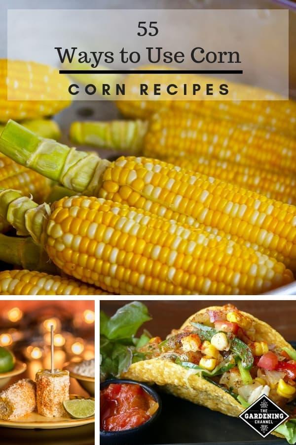 55 Ways to Use Fresh Corn Recipe Ideas