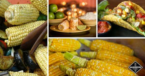 Ways to use all the corn you grew